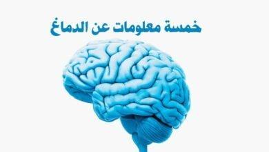 صورة الدماغ البشري
