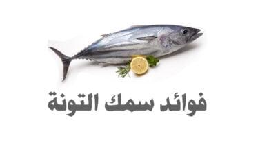 صورة ما هي فوائد سمك التونة ؟