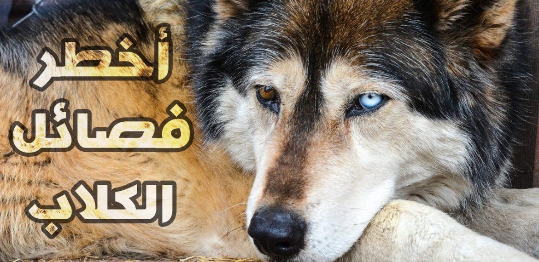 أخطر عشر فصائل كلاب في العالم