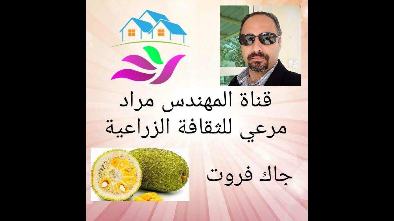 صورة فاكهة الجاك فروت وكيفية زراعتها في الوطن العربي