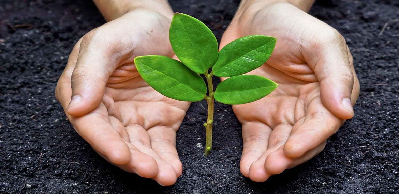 فوائد السماد الطبيعي في الزراعة المنزلية