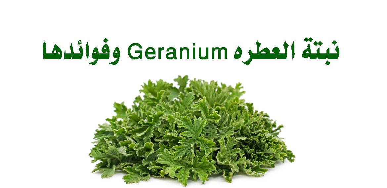 نبتة العطرة Geranium وفوائدها
