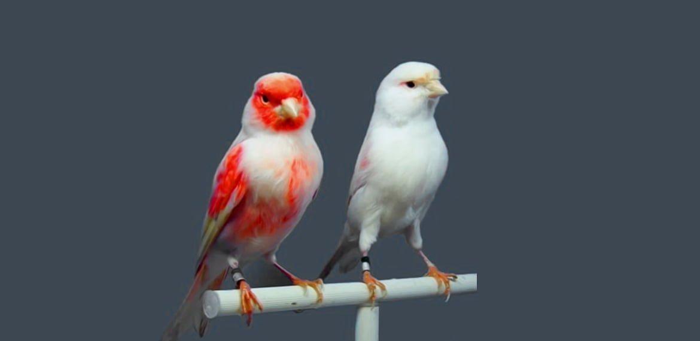 نصائح للمبتدئين عند أول مرة تشتري العصافير