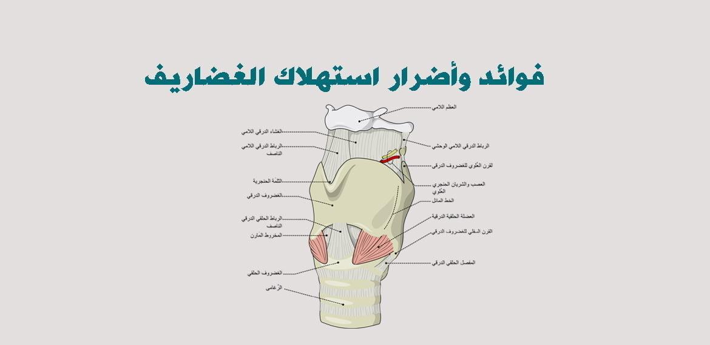 صورة فوائد وأضرار استهلاك الغضاريف