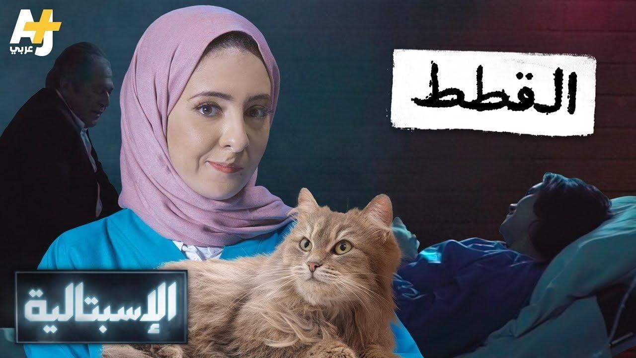 صورة القطط والبشر علاقة لها جانب مظلم
