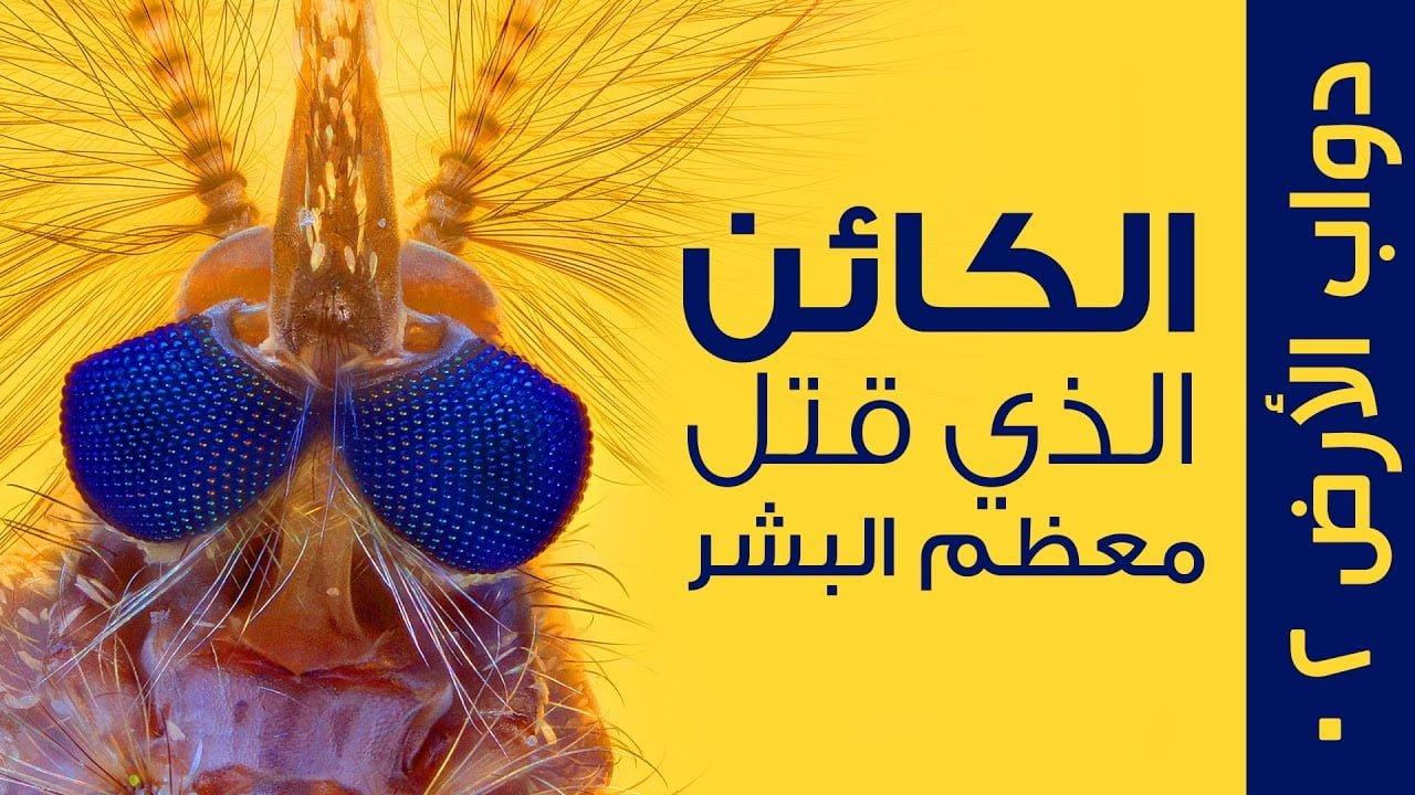 صورة البعوض أخطر كائن على الأرض