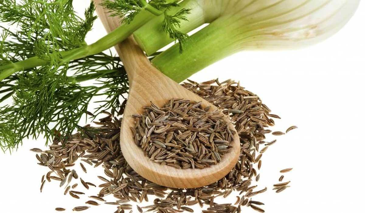 فوائد الشمر للدورة الشهرية ماكتيوبس نبات الشمر وآلام الدورة الشهرية