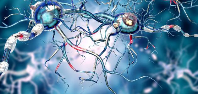 ما هي الأعصاب ؟
