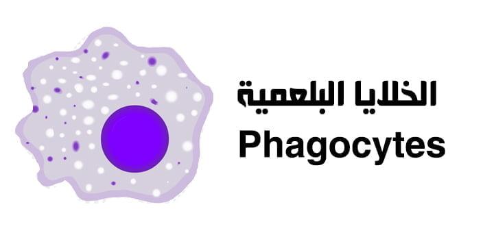 الخلايا البلعمية Phagocytes