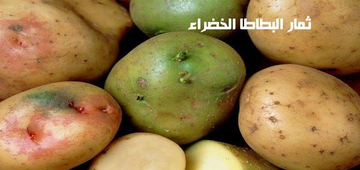 ثمار البطاطا الخضراء