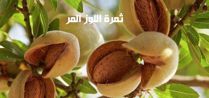 ثمرة اللوز المر