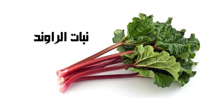 نبات الراوند