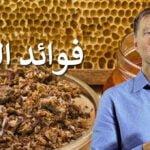 عكبر النحل لتقوية المناعة ضد الفيروسات