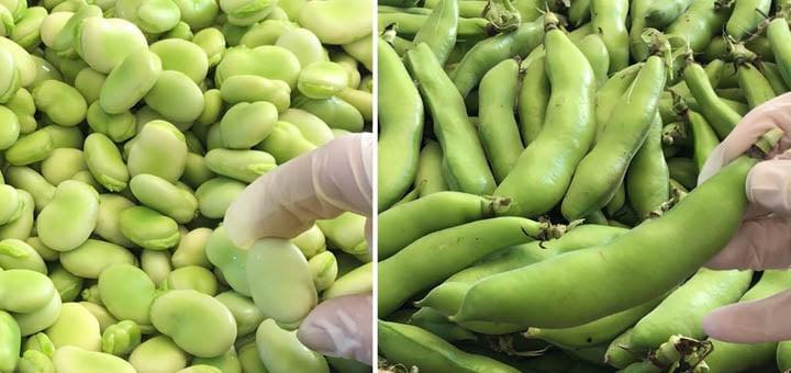 صورة طريقة تخزين الفول الأخضر في الثلاجة