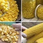 أسهل طرق حفظ الذرة بدون ثلاجة