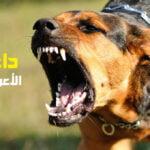 داء الكلب الأعراض والعلاج وتعريف شامل