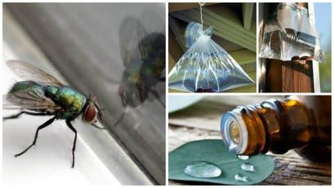 طرق التخلص من الذباب المنزلي بدون مبيدات حشرية