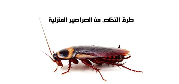 طرق التخلص من الصراصير المنزلية