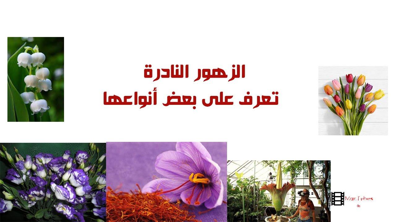 صورة الزهور النادرة تعرف على بعض أنواعها