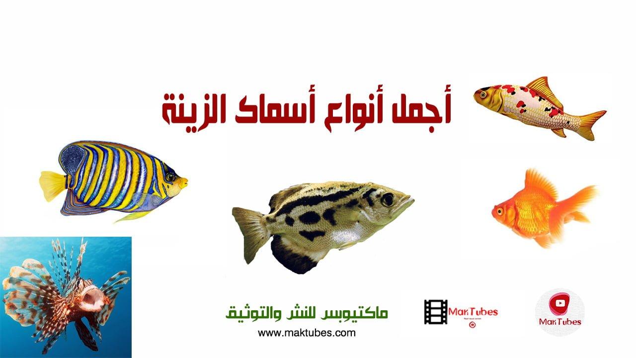 صورة أنواع أسماك الزينة