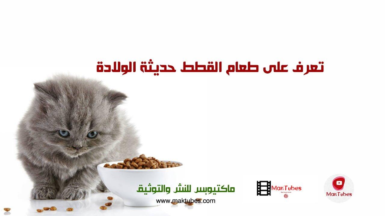 صورة تعرف على طعام القطط حديثة الولادة