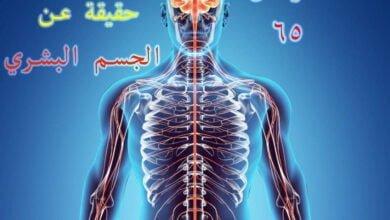 صورة أكثر من 65 حقيقة عن الجسم البشري، لن تستطيع ان تتخيلها !
