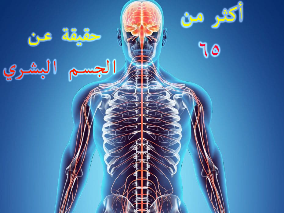 أكثر من 65 حقيقة عن الجسم البشري، لن تستطيع ان تتخيلها !
