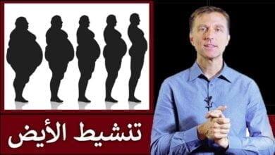 صورة تسريع حرق الدهون | دكتور بيرج يشرح تنشيط الأيض بالتفصيل