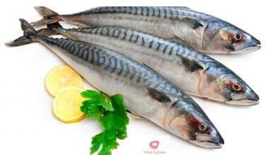 صورة فوائد السردين | الفوائد الصحية للسردين والاسماك الزيتية معروفة على نطاق واسع