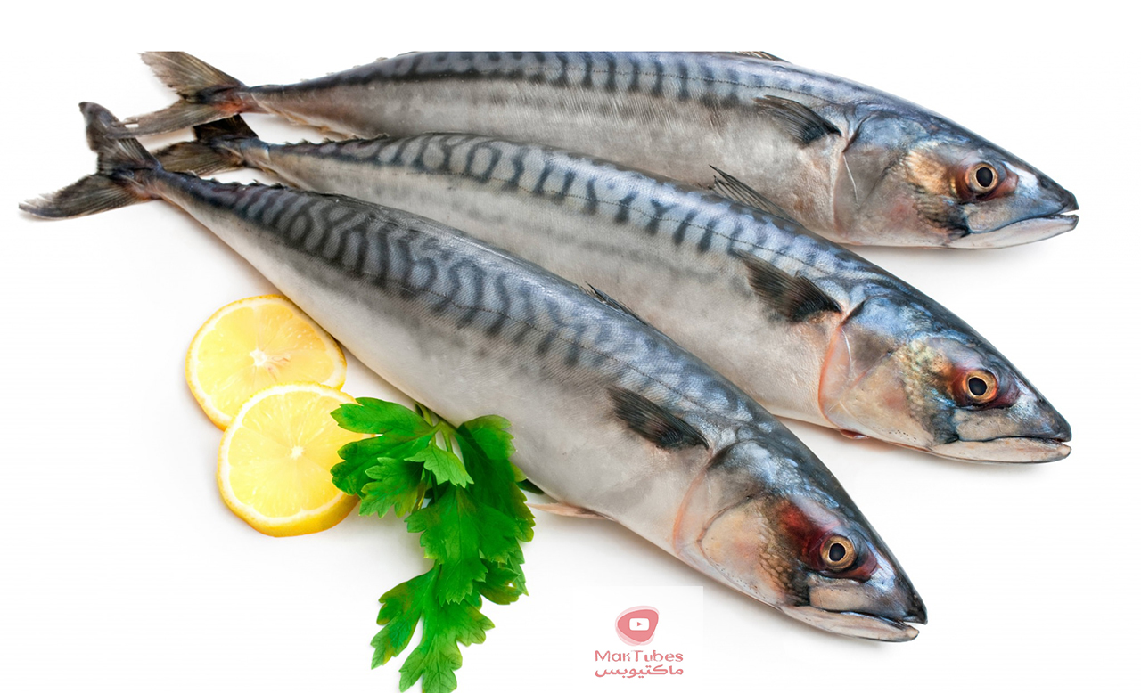 فوائد السردين   الفوائد الصحية للسردين والاسماك الزيتية معروفة على نطاق واسع